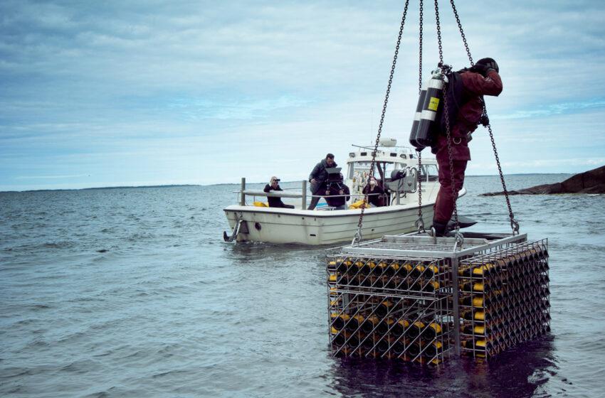 Veuve Clicquot avasi vedenalaisen viiniholvin Ahvenanmaalle – katso video